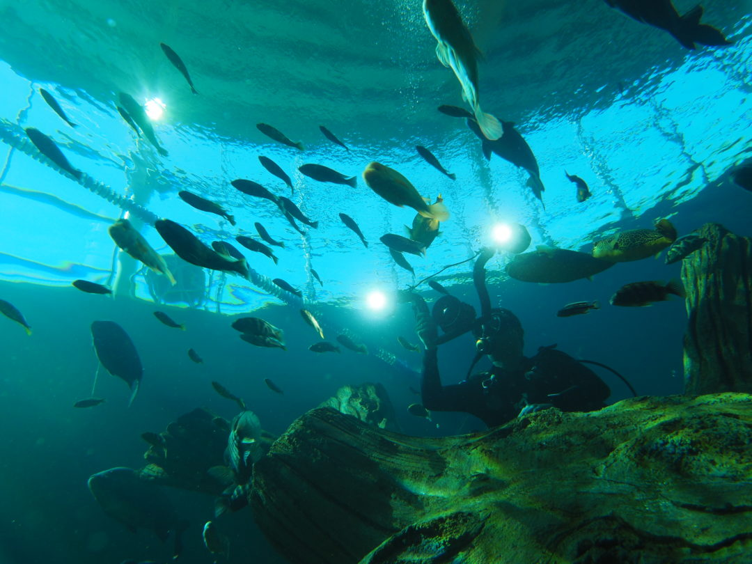 Plongeur photographiant des poissons