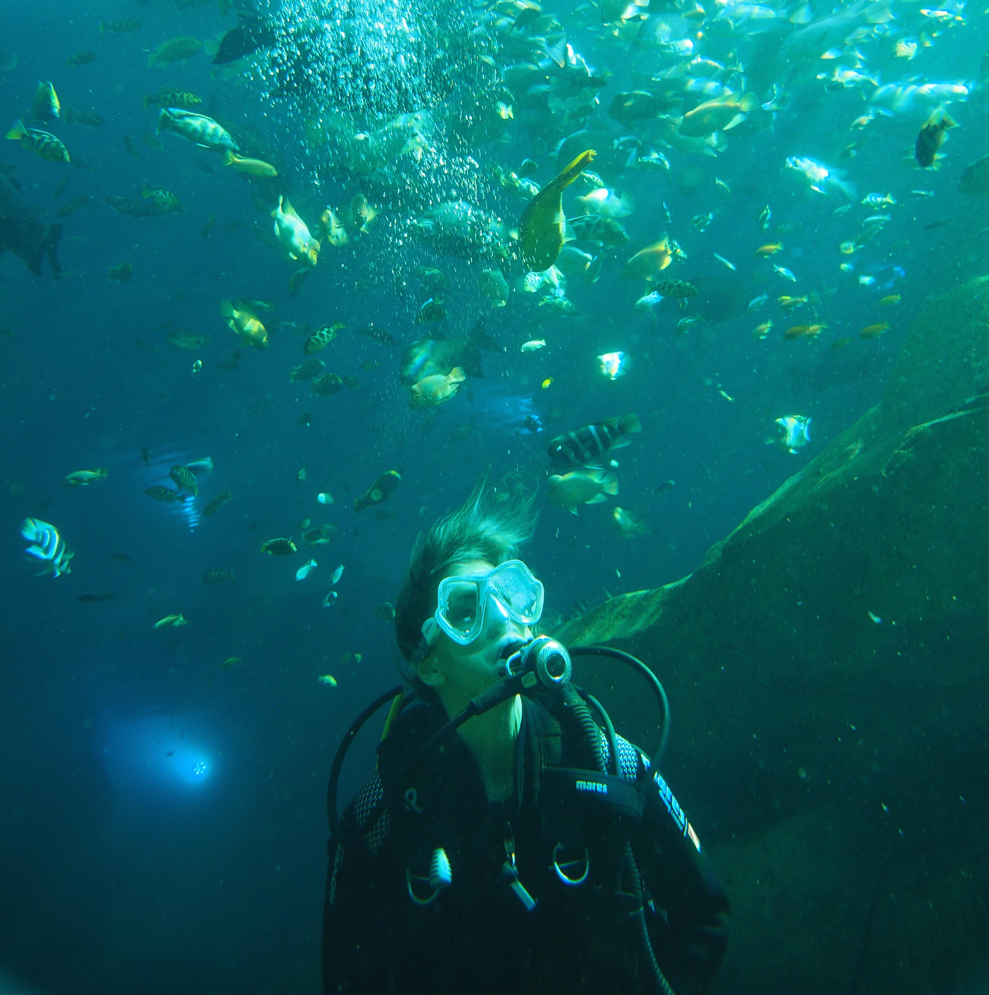 Photo de plongeuse au milieu des poissons