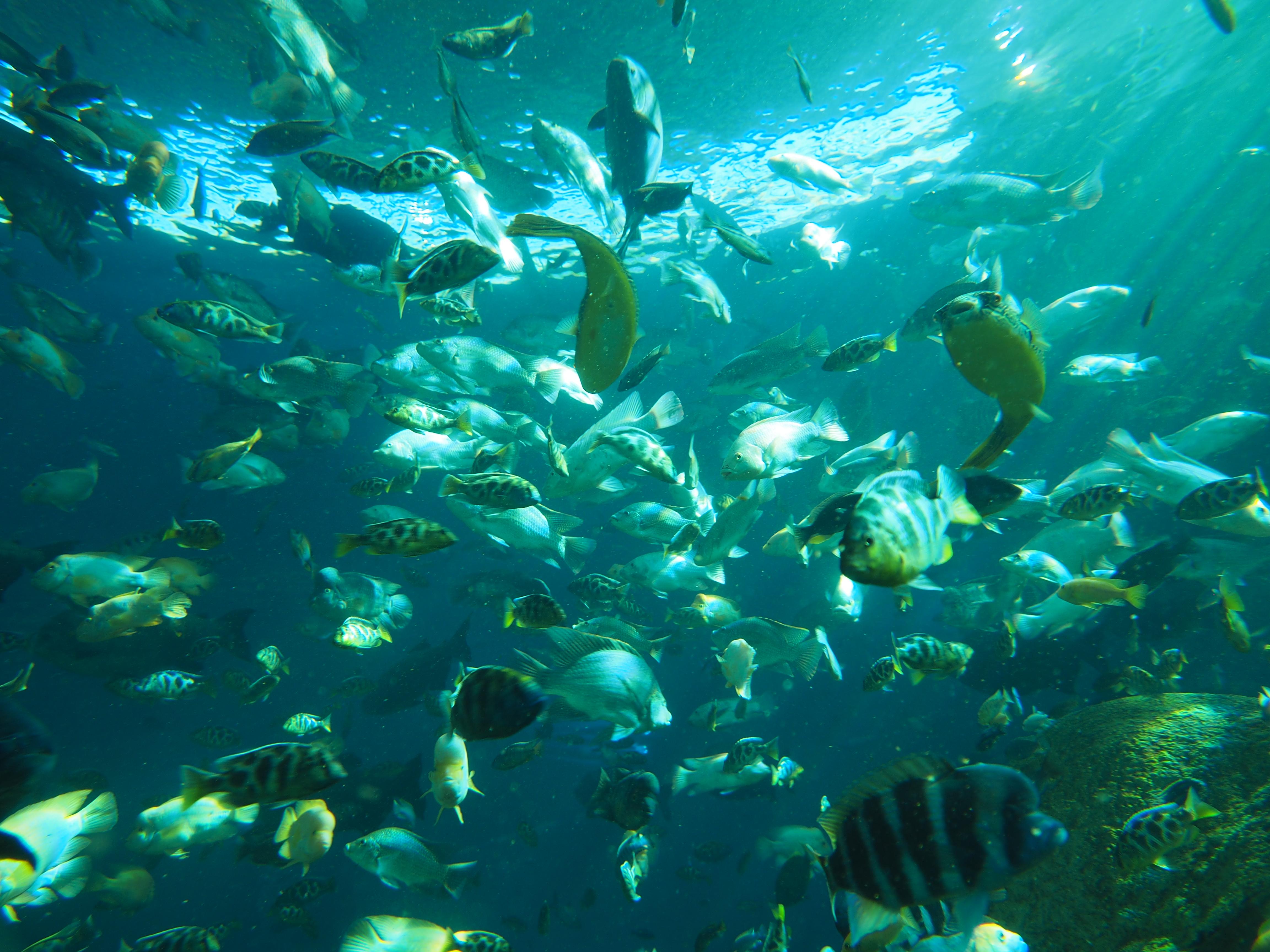 Image de banc de poissons tropicaux